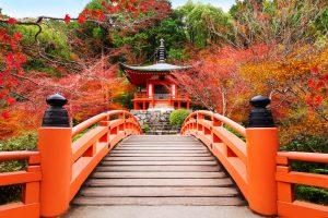 京都を通して感じた危機感と畏敬の念